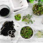 Grow microgreens indoors without soil